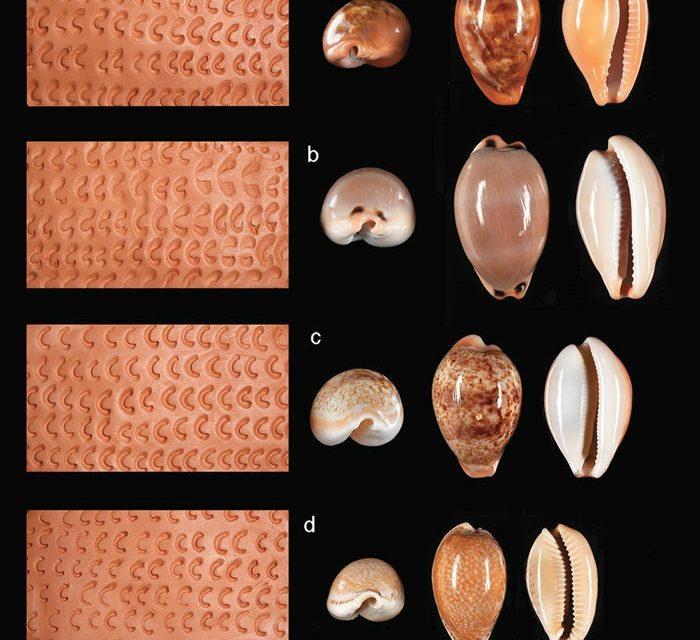 Identifican herramientas empleadas en la decoración de cerámica durante el Neolítico